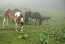 Free Horses In A Fog Royalty Free Stock Photo - 14429895