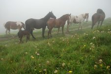 Free Horses In A Fog Stock Photo - 14429900