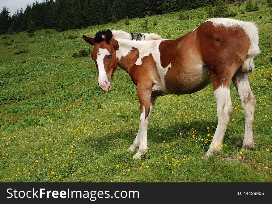 Stallion on a hillside