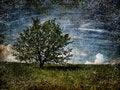 Free Alone Tree On Field. Royalty Free Stock Photos - 14431638