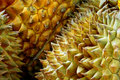 Free Durian Stock Photography - 14433302
