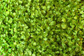 Free Green And Fresh Salad Background Stock Photo - 14439410