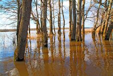 Free Flood In Wood Royalty Free Stock Photography - 14431117