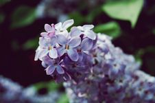 Free Flowers Purple Stock Photography - 14432002