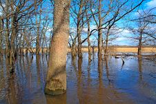 Free Flood In Wood Royalty Free Stock Photo - 14432225