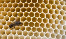 Free Bee Stock Photo - 14432510