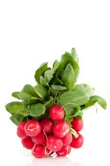 Free Red Healthy Radish Royalty Free Stock Photo - 14433485