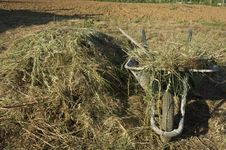 Free Wheelbarrow With A Haystack Stock Images - 14433844