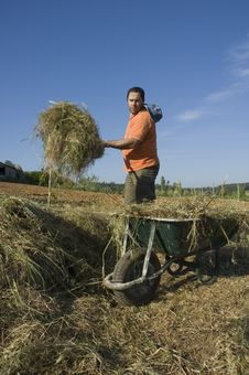 Farmer Working On The Farm Royalty Free Stock Image