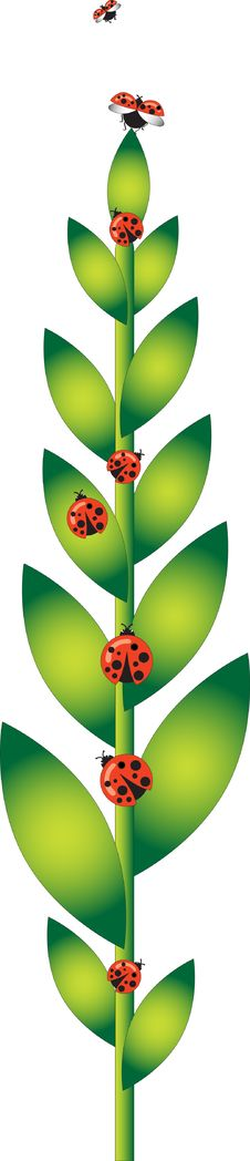 Green Plant With Ladybugs Stock Images