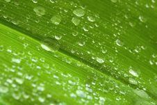 Free Drops On The Leaf Stock Image - 14435561