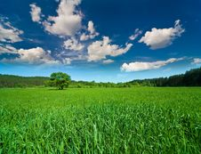 Free Sky With Clouds And The Green Field Royalty Free Stock Image - 14435616