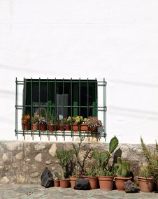Free Pots Of Cactus In Front Of White & Stone Wall Stock Images - 14436104