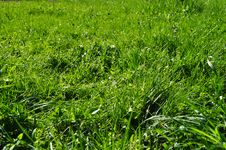 Free Green Grass Royalty Free Stock Image - 14436946