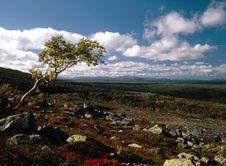 Free Oblique Tree Royalty Free Stock Photo - 14438395