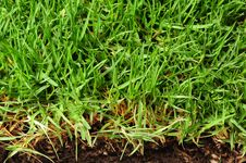 Bright Grass. Stock Images