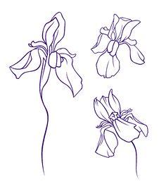 Free Iris Set Royalty Free Stock Photos - 14438928