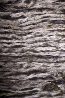 Closeup Of Beautiful Fur Stock Photo