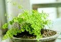 Free Bonsai Royalty Free Stock Photos - 14442818