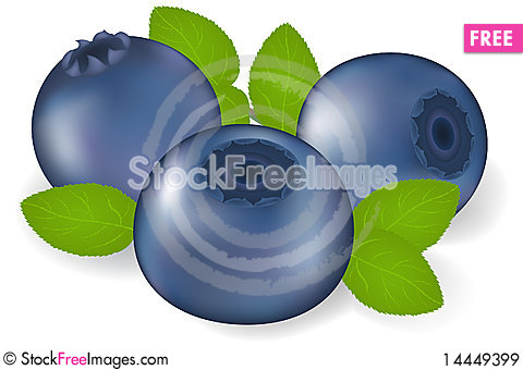 Free Bilberry With Leaves. Vector Royalty Free Stock Images - 14449399
