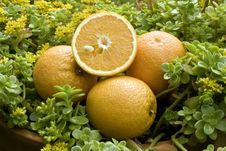 Free Oranges Outdoors Stock Photos - 14440383