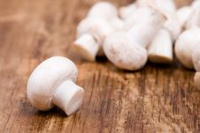 Free Fresh Champignon Stock Photography - 14440562