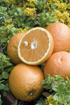 Free Fresh Oranges Stock Images - 14440624