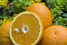 Free Fresh Oranges Stock Images - 14440644