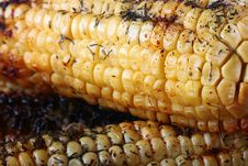 Paked Corn Royalty Free Stock Photography