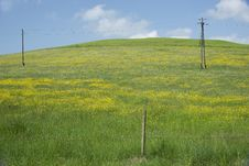 Yellow Hills In The Allgäu, Germany Stock Images