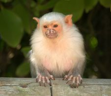 Free Cute  Small Monkey Stock Photography - 14440942