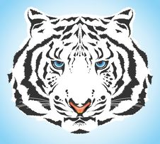 Free White Tiger Stock Image - 14443001