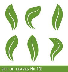 Leaves Set For Design Royalty Free Stock Photo
