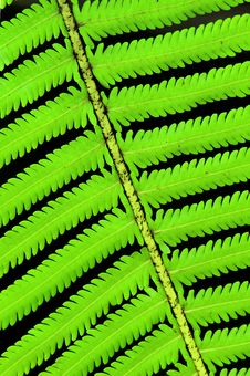 Free Fern Royalty Free Stock Photography - 14443837