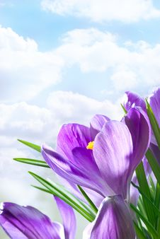 Free Beautiful Spring Flowers Royalty Free Stock Photos - 14444688