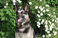 Free Dog Royalty Free Stock Photography - 14444927