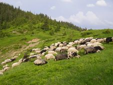 Free Sheep In Mountains. Stock Photography - 14445182