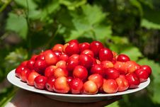 Free Tasty Cherries Stock Photos - 14445263