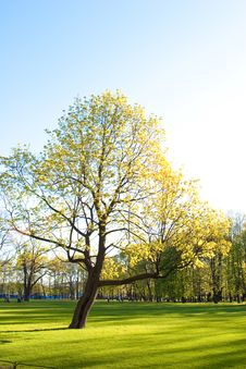 Free Park In Spring Royalty Free Stock Photos - 14445398