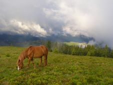 Free Horse In The Morning In Mountains Stock Photos - 14445403