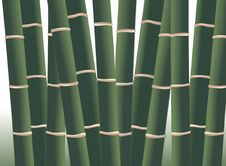 Free Bamboo Forest Royalty Free Stock Photography - 14446067