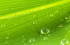 Free Water Drops On Green Leaf Stock Image - 14448421