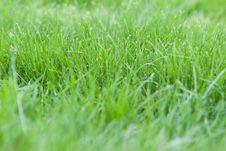 Free Green Grass Stock Images - 14449284
