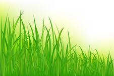Free Grass. Vector Stock Image - 14449411