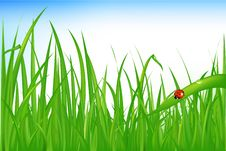 Free Grass With Ladybird. Vector Stock Photos - 14449413