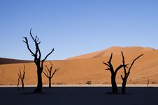 Free Deadvlei Royalty Free Stock Photography - 14449487