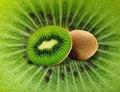 Free Kiwi On Kiwi Stock Image - 14454181