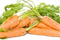 Free Fresh Carrots Stock Images - 14457444