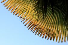 Free Palm Leaf Stock Photos - 14450273