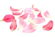 Petals Of Lilies Stock Image